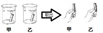 """如图所示,我们从同一个萝卜切下两条大小、质量都完全一样的萝卜条,放入装有等体积清水和浓盐水的甲、乙两个烧杯中,在溶液中浸泡萝卜条后一段时间取出。请根据图片所示情况帮助老师完成下面的实验内容。 (1)请据图回答实验现象:甲烧杯中萝卜条 (填""""变硬""""或""""变软"""")。"""