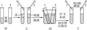 """下列有关""""馒头在口腔中的变化""""的实验描述正确的是( ) A. 该实验是对照实验,变量是温度 B. 结果是2号试管内会出现蓝色 C. 结论是唾液淀粉酶对淀粉有消化作用 D. 若将丙装置保持30分钟,结果是两支试管内都不变蓝"""
