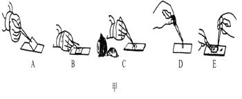 下图甲是小明制作洋葱鳞片叶内表皮细胞临时装片的过程图,请根据该图回答有关问题 (1)写出小明正确的操作步骤顺序:____________________。 (2)图D滴的液体是________,图E滴的液体是________。 (3)能控制物质进出细胞的是[